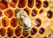 Ilustrácia - Včelie produkty