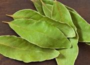 Ilustrácia - Vavrín bobkový – bobkový list