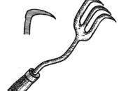 Ilustrácia - Moria nôžka