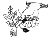 Ilustrácia - Zber plodov